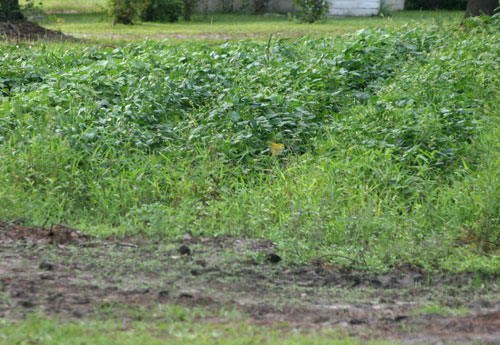 weed control could mean in ground gardening is not the best garden method for you