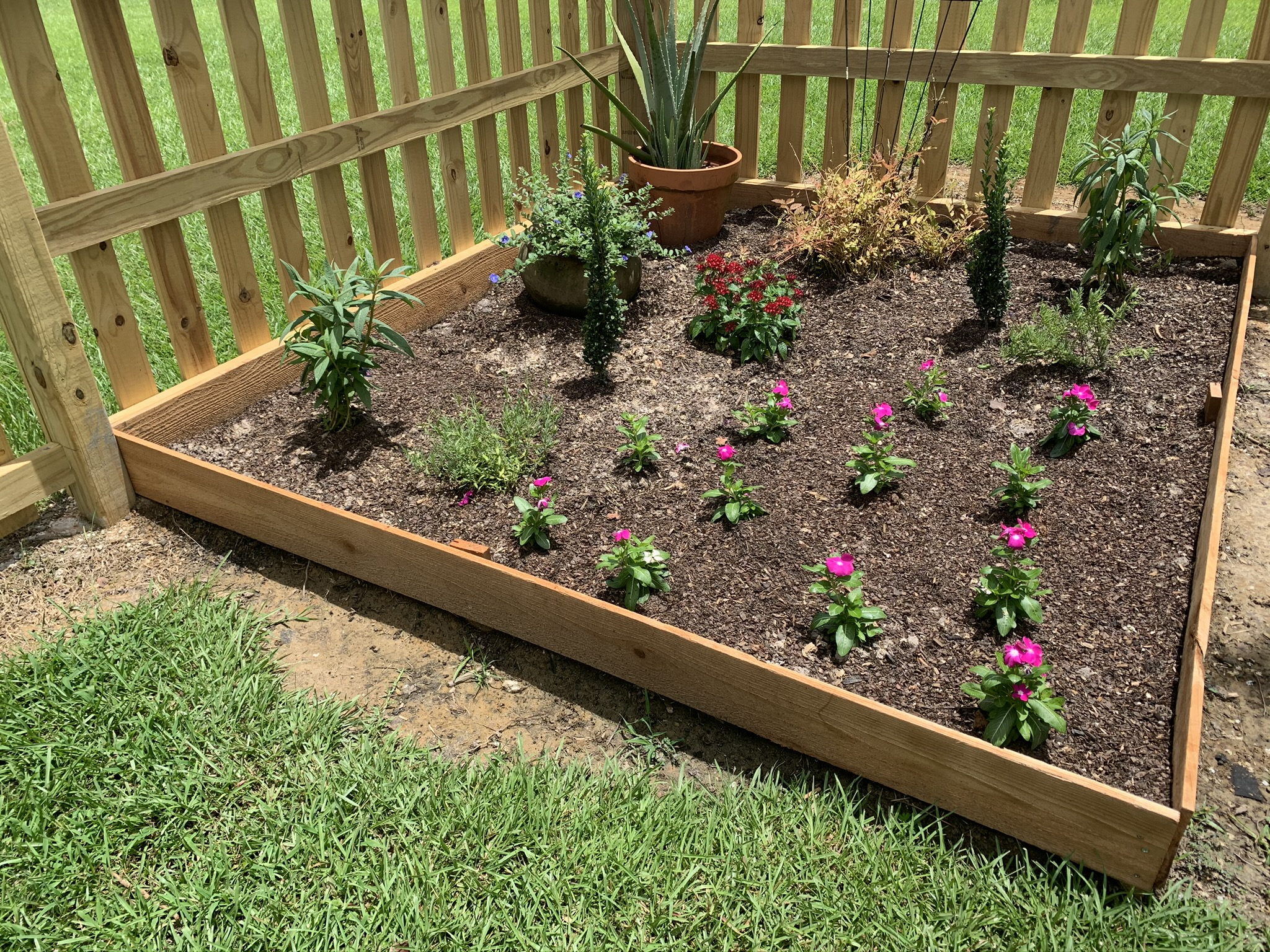 Garden bed made of cedar fence boards