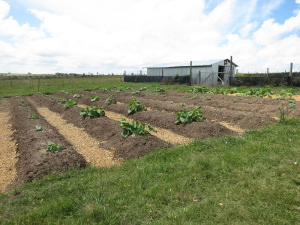 An in ground garden could be the best garden method for you.
