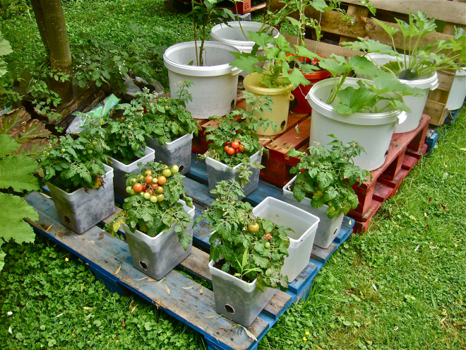 using buckets and plastic containers to grow vegetable garden could be best garden method for you
