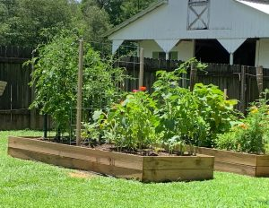 sprawling summer garden in raised beds